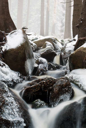 small stream flowing down the mountain through the winter forest photo