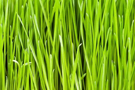 green fresh grass as a background texture photo