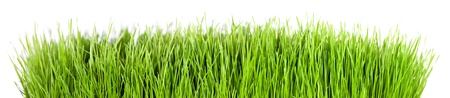 Panorama of green grass in front of white background photo