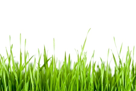 green grass in front of white background Stock Photo - 9539914