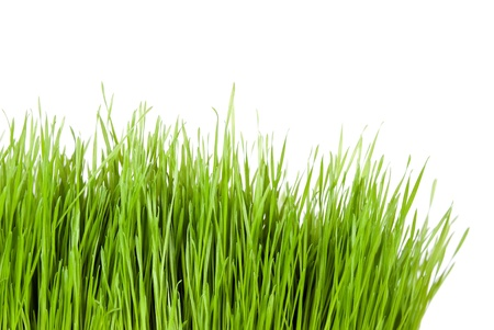 green grass in front of white background Stock Photo - 9539897