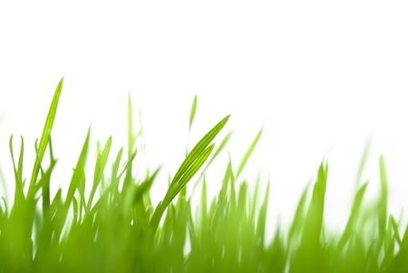 green grass blurred with copy space on top Stock Photo - 9539908