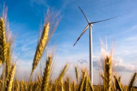 out of production: a wind turbine in the grain-field in front of blue sky