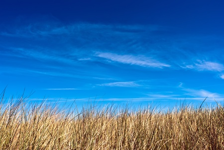a dune with blue sky in the background Stock Photo - 9979444