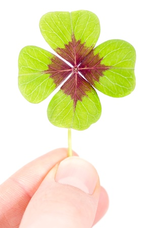 four leafed clover: a fourleaved cloverleaf is held with two fingers
