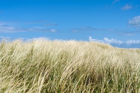 Dune grass before blue sky with clouds Stock Photo - 14076458