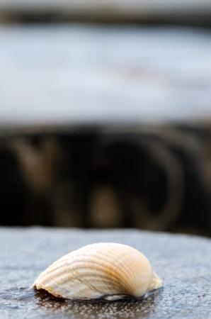 a shell lies on a wooden stake at the beach photo