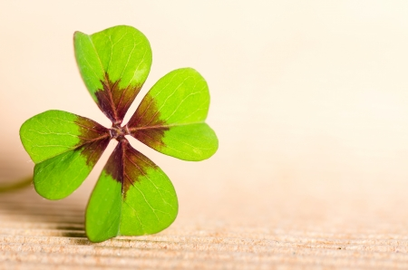 superstition: green four-leaved cloverleaf with copy space