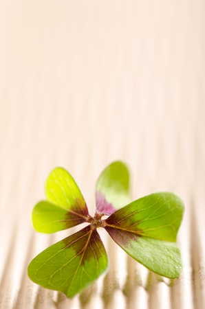 green four-leaved cloverleaf with copy space Stock Photo - 16681709