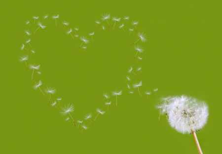 go green background: dandelion seed head shapes a heart before green background
