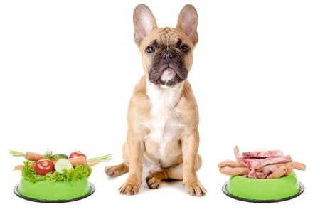 Een hond heeft de keuze tussen vlees of groenten vóór witte achtergrond