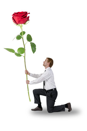 kneeling man: man kneeling a rose holding before white background