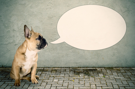 a French bulldog with a speech bubble photo