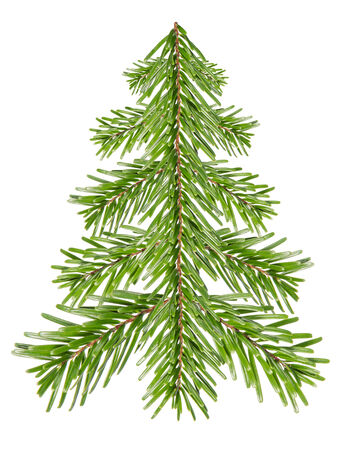christmas tide: Fir tree made of fir branches before white background