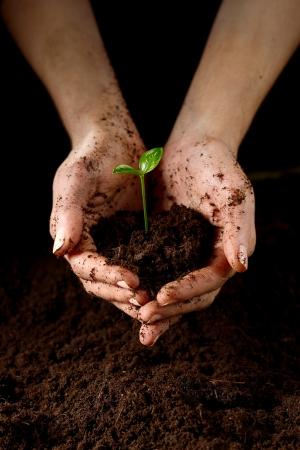 Hands with plant Standard-Bild