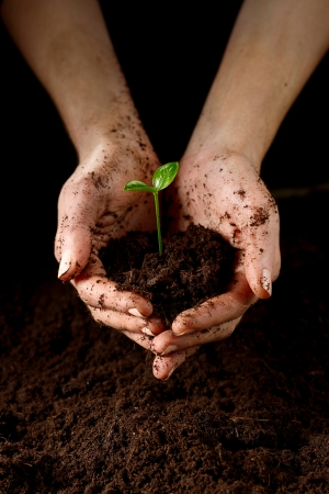 Hands with plant Stock Photo