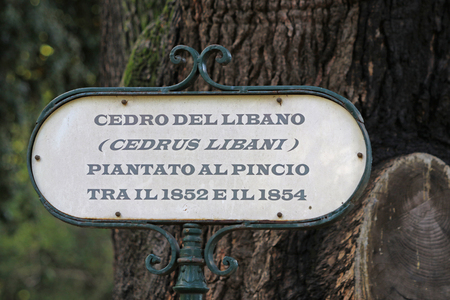 label for a tree saying Lebanese cedar tree Latin cedrus libani planted between 1852 and 1854 in the Villa Borghese public park in central Rome in Italy