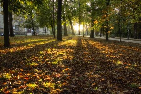 Beautiful autumn park, spectacular scenery, autamn leaves Stock Photo