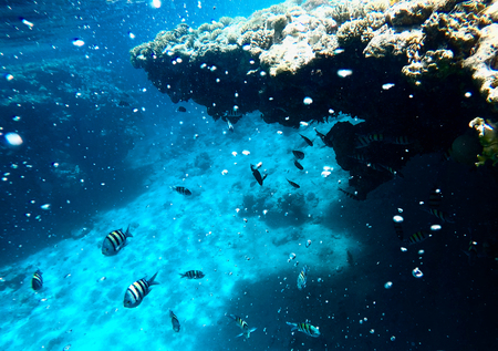 Huge amount of fish, red sea, coral reefs Stock Photo