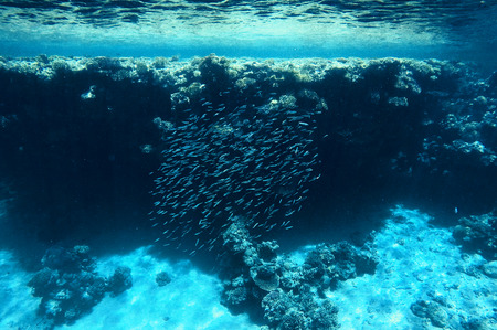 a flock of fish under water, coral reefs, under the water
