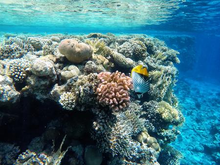 Nice coloured coral reef with beatutiful fish