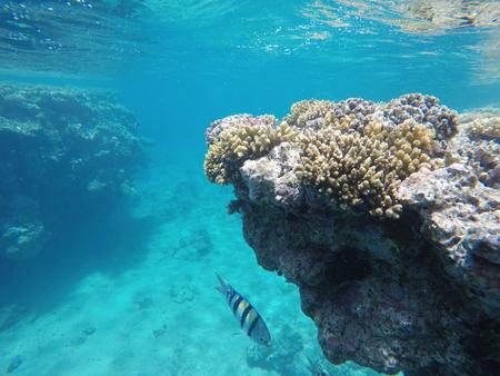 Red sea, underwater scenery,red sea, blue water