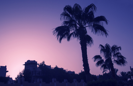 Palm trees, new retro wave, rest on the sea