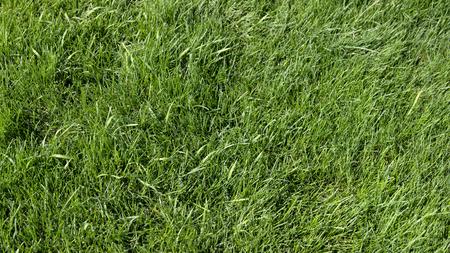 Green grass background, nice pleasent grass Фото со стока