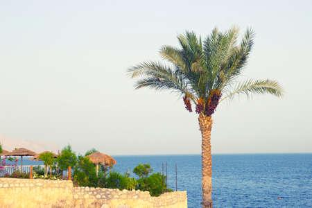 Palm tree on the seaside