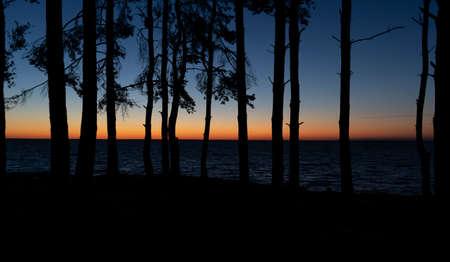 Silhouettes of trees at sunrise Zdjęcie Seryjne