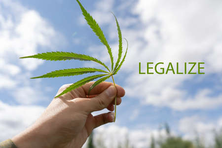 Man holds marijuana leaf, marijuana legalization