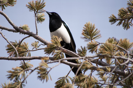 Magpie Lookout photo