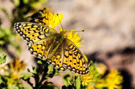 Toenemende Vlinder Stockfoto