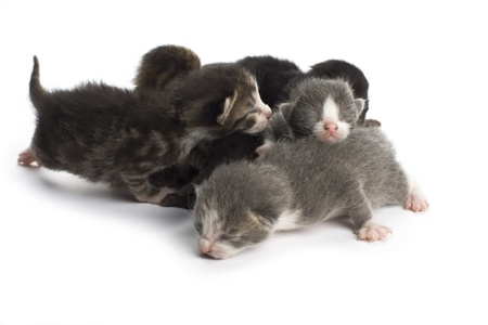 Blind kittens on white background. Stock Photo