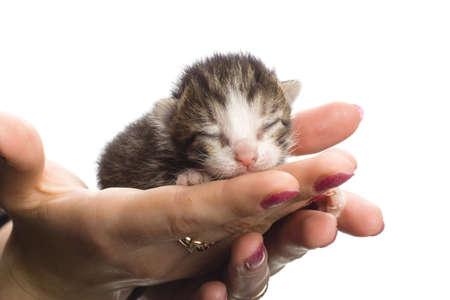 Blind kittens on hand on white background.