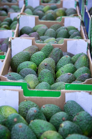 Many boxes filled with ripe avocados in the store. Stock Photo