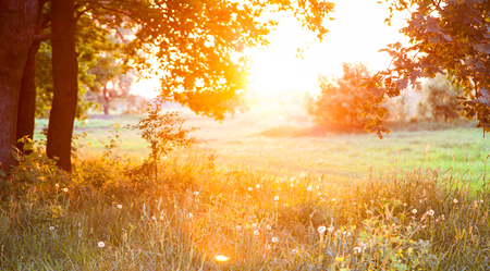 Sunset  Forest Glade  The branches of the trees  Green grass  Glare  Stock Photo