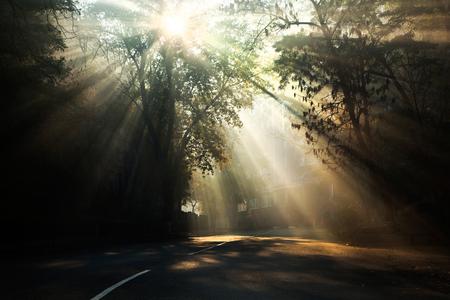 Zonnestralen schijnen door de takken van een boom in de mist