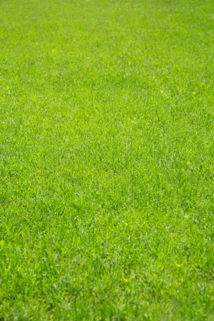 Part of the field with green grass cropped.