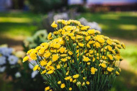 yellow wildflowers: Bouquet of yellow wildflowers. Stock Photo