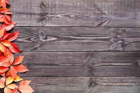 old furniture: Background of wooden planks black color with leaves of wild grapes. Stock Photo