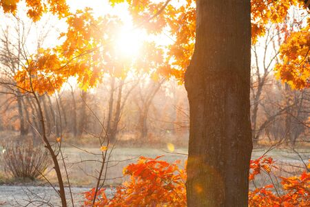 marge: The sun shines through the branches of trees in the autumn forest