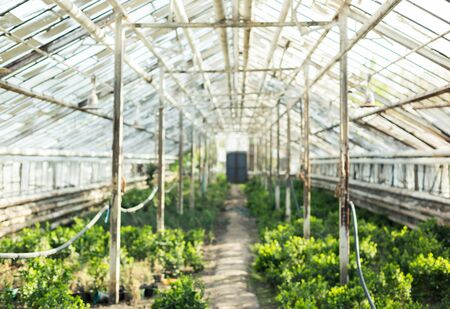 hotbed: Growing different plants in the old greenhouse.