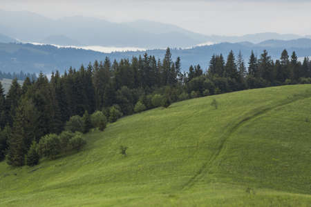 uplands: Mountain meadow with green grass, trail, forest and mountains in the background. Stock Photo