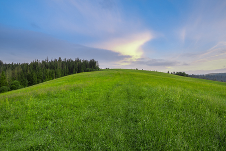 uplands: Mountain slope with green grass against the sky at dawn