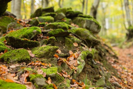 Pile of stones covered with moss in the autumn forest