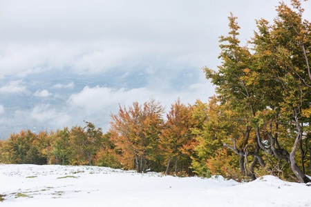 The slope with snow and beautiful, colorful autumn trees on background of the valley with clouds