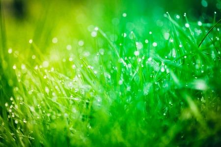 Dew drops on bright green grass Stock Photo