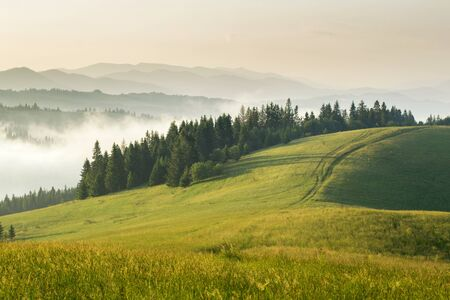 Mountain meadow with green grass, trail, forest and mountains in the background. Stock Photo