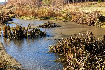 The swamp covered with mud Stock Photo